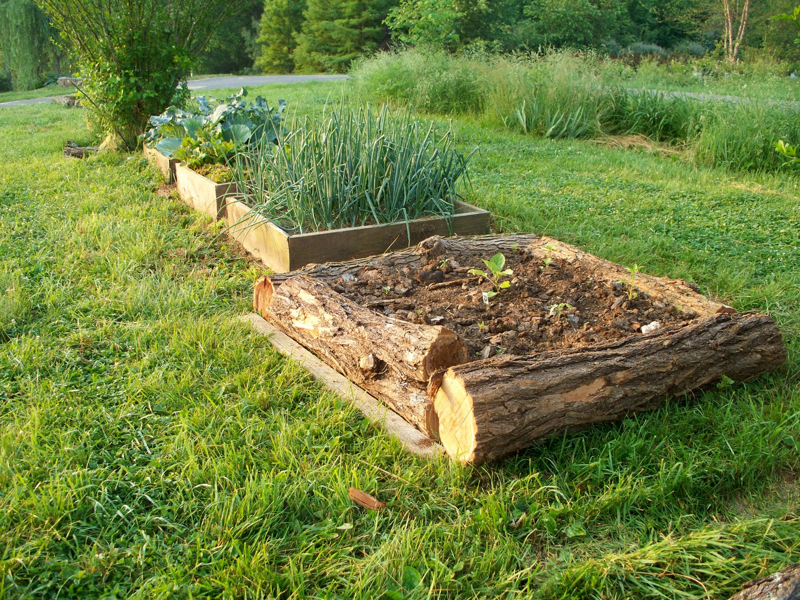 Raised vegetable garden beds for Raised vegetable garden bed designs