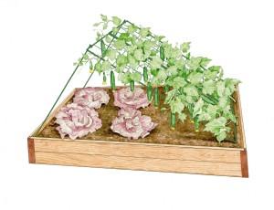 Gardeners Cuke trellis and lettuce
